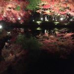 紅葉を見に行きました!の詳細へ